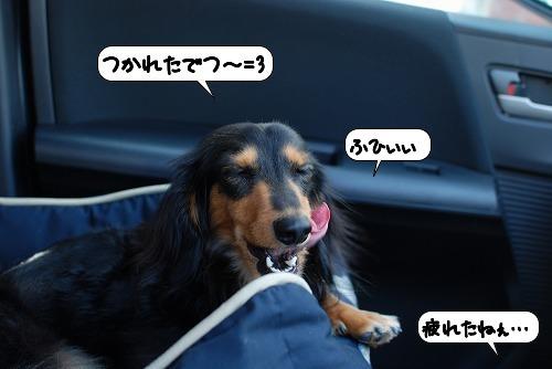 20110912_130715.jpg