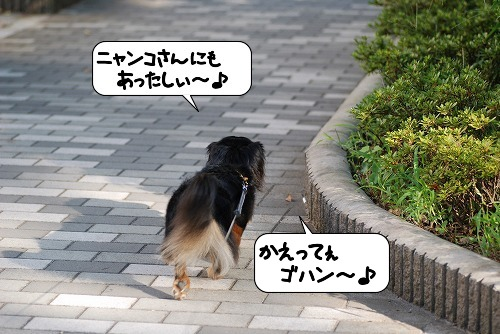 20110914_132636.jpg