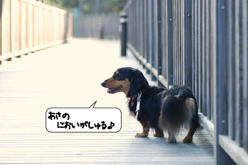 20110922_130006.jpg