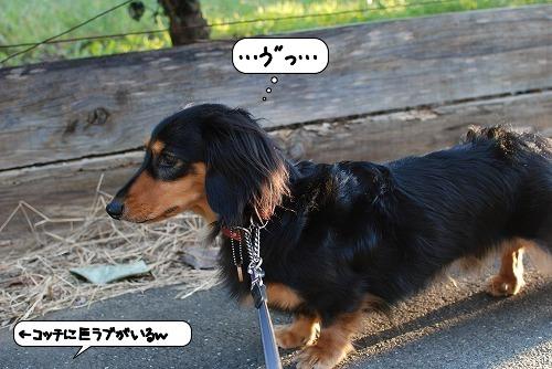 20111004_131447.jpg