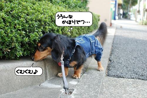 20111011_114638.jpg