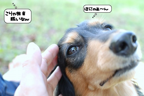 20111012_110654.jpg