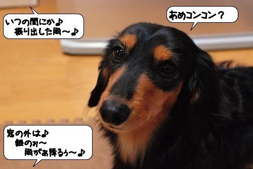 20111111_132012.jpg