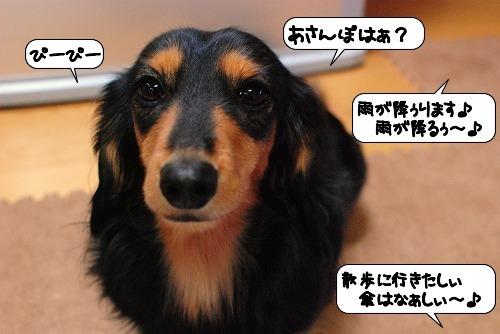 20111111_132329.jpg