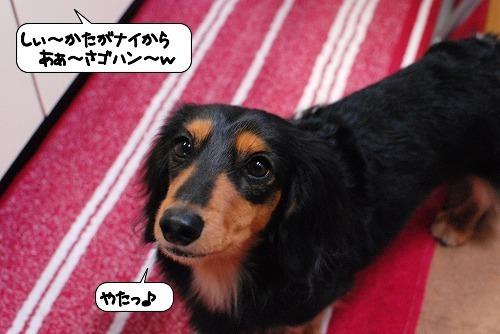 20111111_132506.jpg