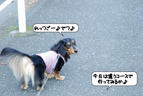 20111116_115241.jpg