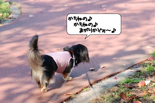 20111116_120536.jpg