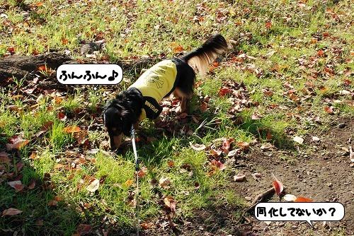 20111125_125911.jpg