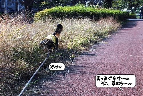 20111125_130051.jpg