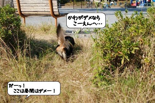20111125_130223.jpg