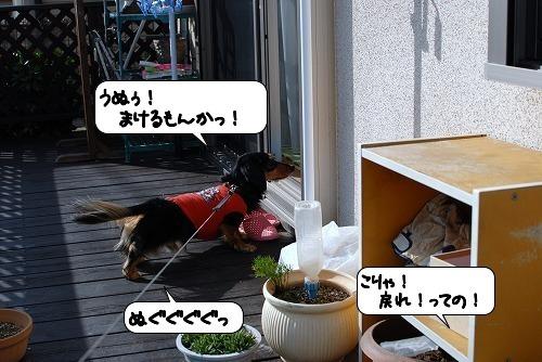 20111128_131115.jpg