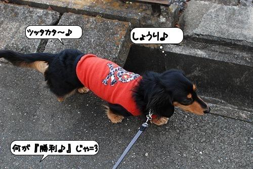 20111128_131249.jpg