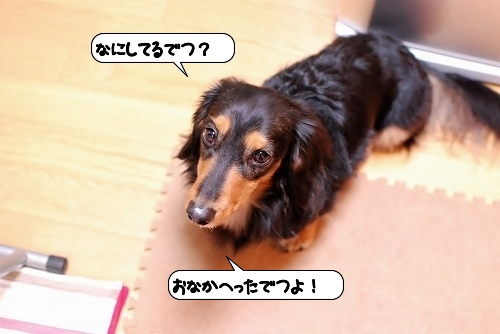 20111201_134414.jpg
