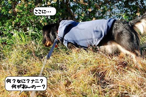 20111206_131110.jpg