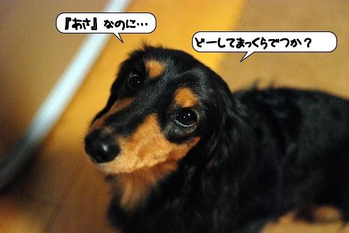 20111209_131524.jpg