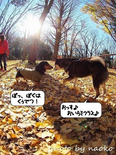 20111215_133322.jpg