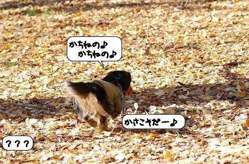 20111216_131747.jpg