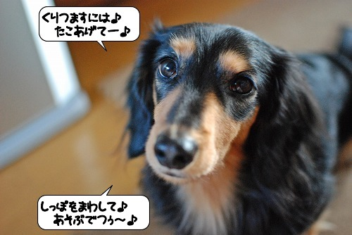 20111227_142916.jpg