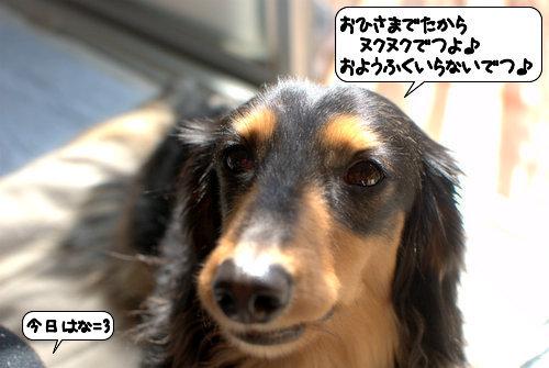 20120321_133535.jpg