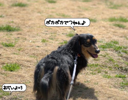 20120323_132906.jpg