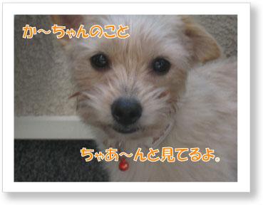 Jirokichi-31.jpg
