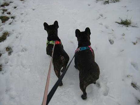 二匹散歩1