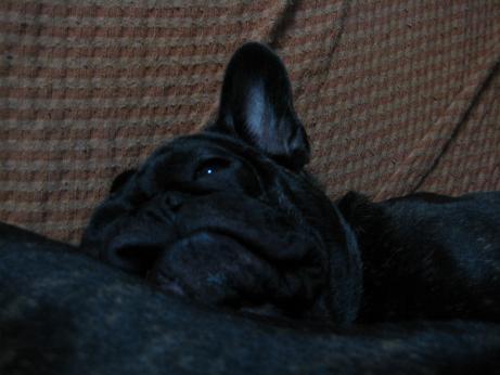 ハクの枕2