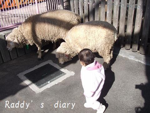 羊さんも!?