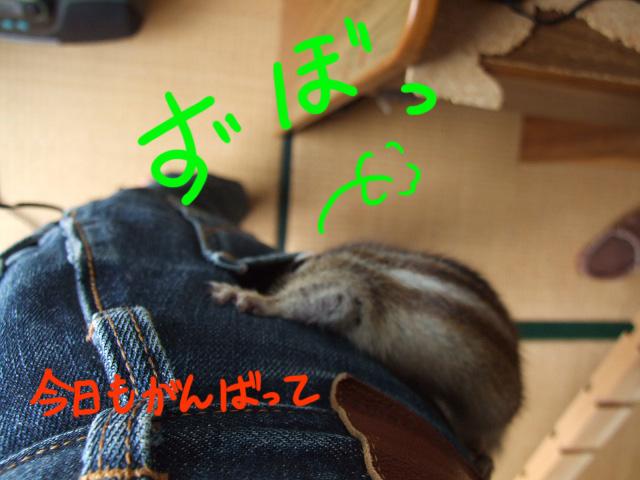 DSCF081119a0507.jpg