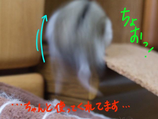 DSCF081120d1246.jpg