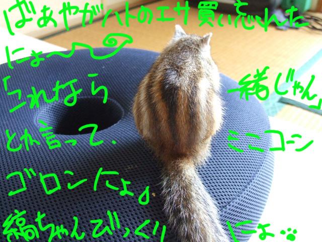 DSCF081219j4926.jpg
