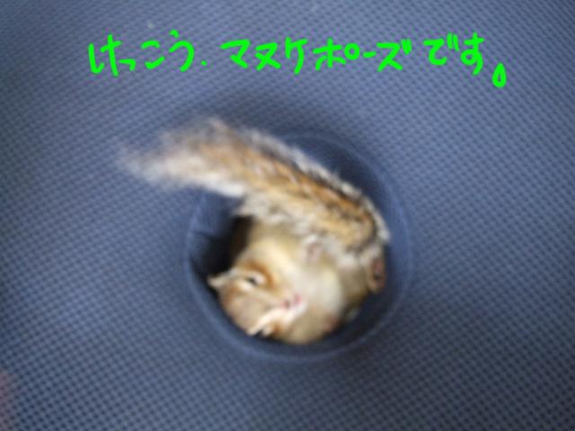 DSCF090715f6179.jpg