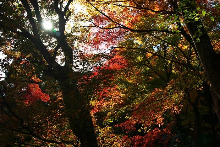 森町 大洞院の紅葉 其の参