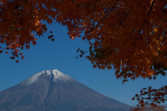 富士山紅葉 田貫湖にて