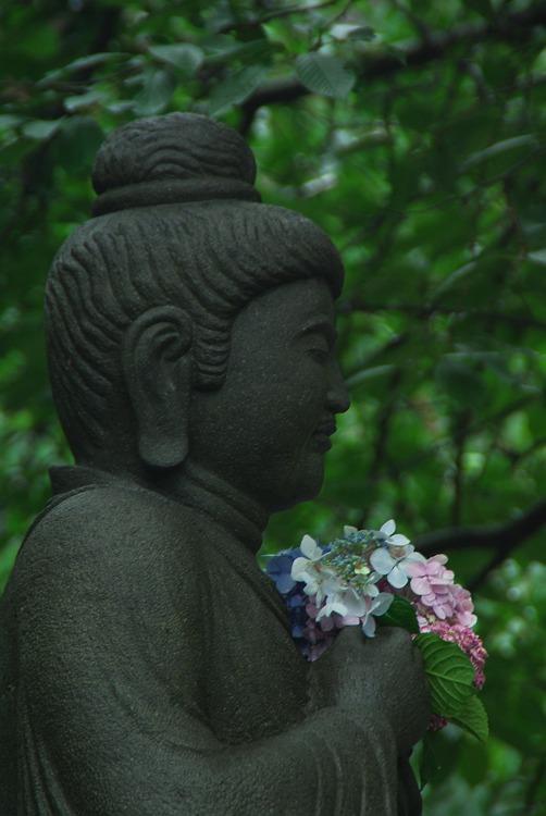 鎌倉長谷寺の紫陽花 其の参