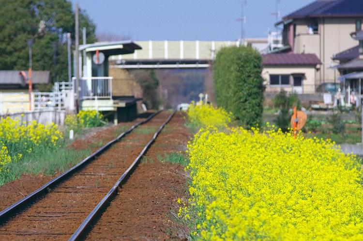 春色の汽車に乗って 7