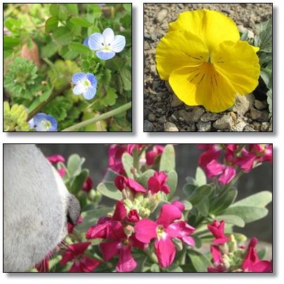 ナナ&お花