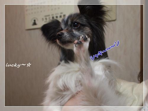 シャキ~ン☆
