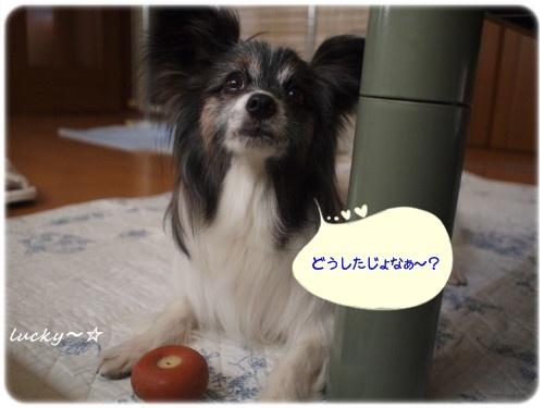どうした☆