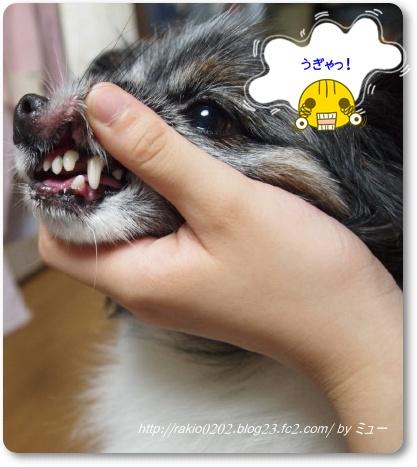 綺麗な歯☆
