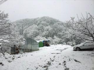 朝の庭の風景