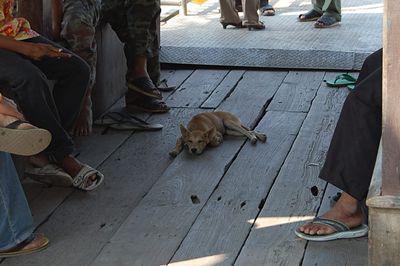 タイの犬②