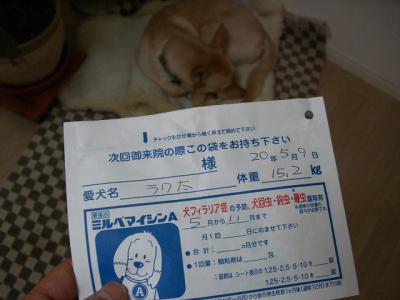 s-CIMG3940_20081119195245.jpg