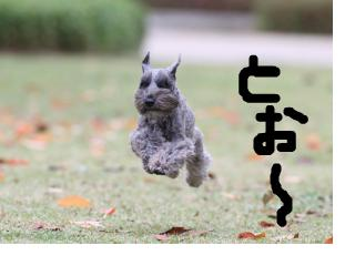 hikou2_20090213000725.jpg