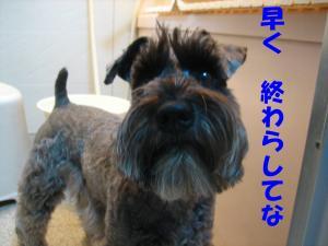 mae_.jpg