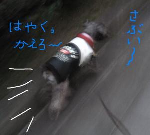 samui_.jpg
