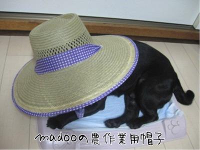 09.6.26.1帽子