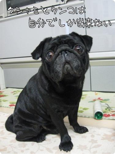 09.9.22.4くしゃみとうんこ