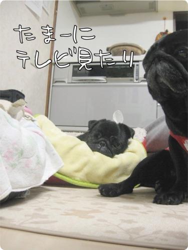 09.9.28.3てれび
