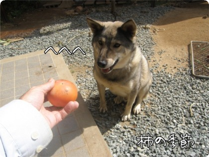 09.10.14.1元気